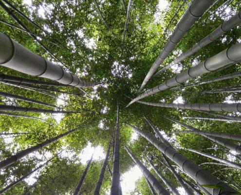 Segiun Bambus